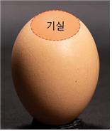 9월 9일은 구구데이! 알아두면 좋은 달걀 상식